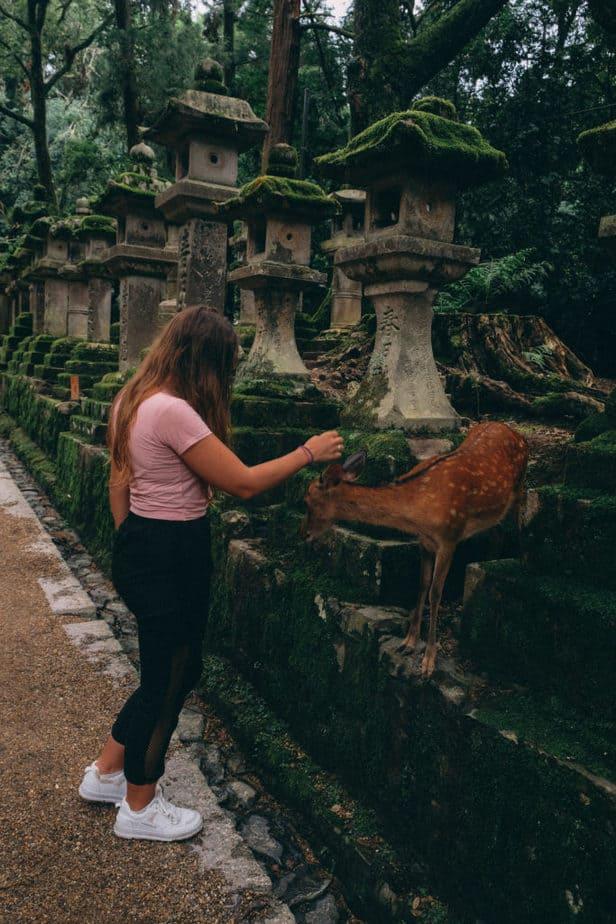 A girl petting a deer in Nara Park, Japan