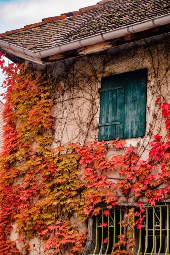 house covered in fall colored leaves in Annecy, France